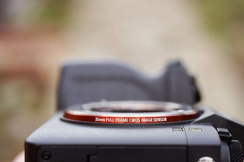 Sony A9II - Sony 400 mm F2.8 G-Master (8)